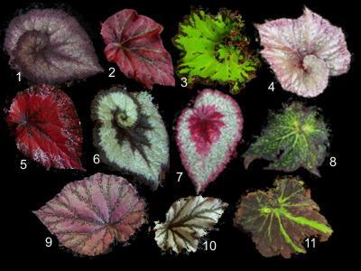 Плетение бисером цветы пошаговое фото для начинающих